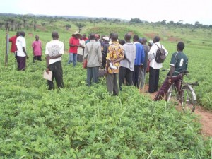 Visite d'un champ semencier d'arachide à Waka et échange d'expérience