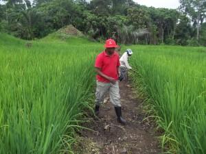 Boende - riz